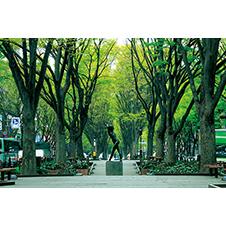 定禅寺通りのけやき並木