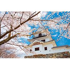 白石城と桜
